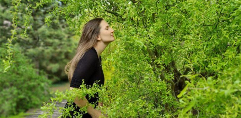 Willow tarot rencontre Willow tree